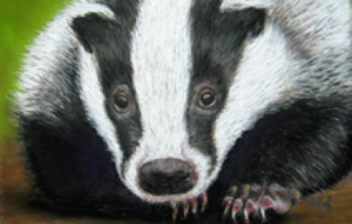 Badger | Pastels | Commission by Lesley Goff