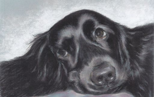 Black Lab Pastel Where's My Cuddles! Pastels by Lesley Goff £125