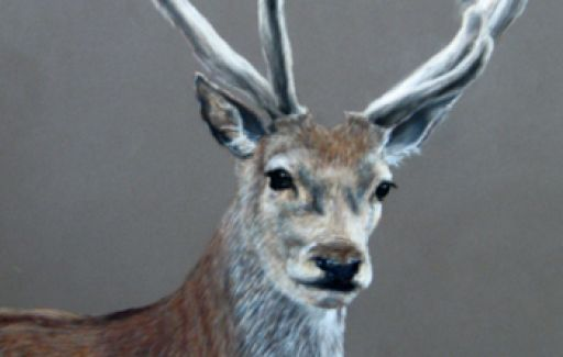 Red Deer Pastel by Lesley Goff £250 -SOLD